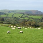 Top 5 rural bed-and-breakfasts in the UK