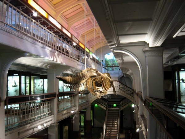 Manchester Museum jo-marshall (was Jo-h)/Flickr