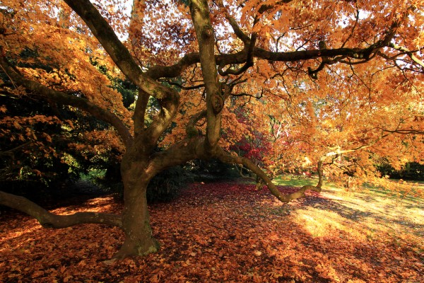 Westonbirt Arboretum during autumn stephendgardner/Flickr