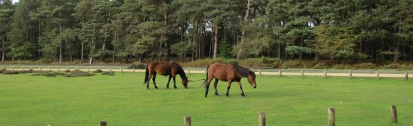Horses in New Forest, Hampshire Robert Linsdell/Flickr